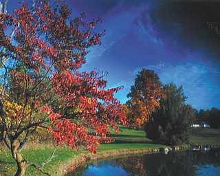 Lana VanAuker of Canfield captured these fall colors at Speece Lake in Canfield.