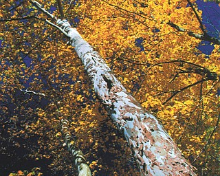 Lana VanAuker of Canfield submitted this fall photo, which she shot in Mill Creek Park.