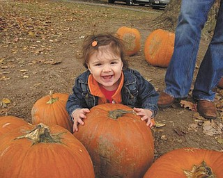 Camryn Hrina, 14 months, had a busy day picking out her pumpkin at White House Fruit Farms this fall. Photo submitted by her parents, Tim and Trish Hrina of Youngstown.