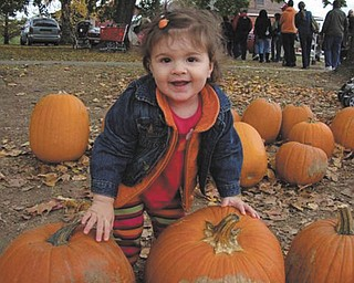 Camryn Hrina, 14 months, selects her favorite pumpkin while visiting White House Fruit Farms this fall. Photo submitted by her parents, Tim and Trish Hrina of Youngstown.