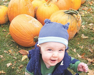 At 6 months old, Austin Wentz enjoyed picking pumpkins at White House Fruit Farm with mom and dad Chris and Chrissie Wentz of Austintown. Photo was submitted by the Wentz family.