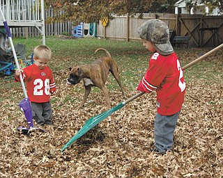 Camren, left, and his brother Caleb help their grandpa clean the yard before an Ohio State football game. Their proud grandparents, who sent in this photo of the two little Buckeye fans, are Tom and Erin Chizmar of Youngstown.