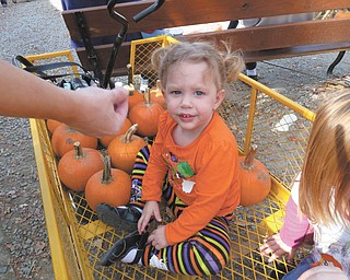 Lilyanah Miller, 22 months, is about to embark on a fall adventure at Country Side Pumpkin Patch on Route 224.
