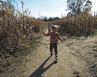 Lilyanah Miller, 22 months, runs through the cornfield at Country Side Pumpkin Patch on Route 224.