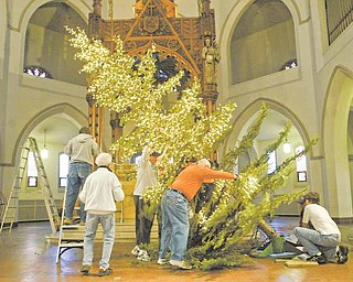 Volunteers at  the Youngstown church work on steadying the blue spruce that will decorate the sanctuary for Christmas. The tree will be arrayed with some 9,600 white lights. It had been targeted for uprooting in the city's Operation Redemption program to clean up the South Side neighborhood near St. Dominic Church.