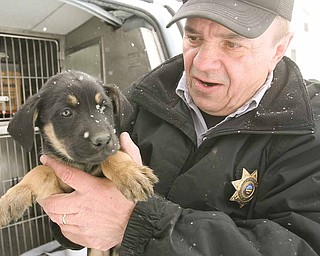 Dave Nelson, Mahoning County dog warden, holds one of several puppies he found Wednesday under a porch on Halleck Street on Youngstown's North Side. The puppies will be taken to the county dog pound, given their shots and made available for adoption.