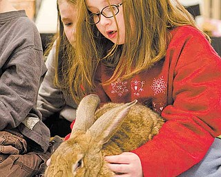 Brighid Donnelly, 8, of Austintown, learns to massage her pet rabbit, Andy, Saturday afternoon at Petco in Boardman.