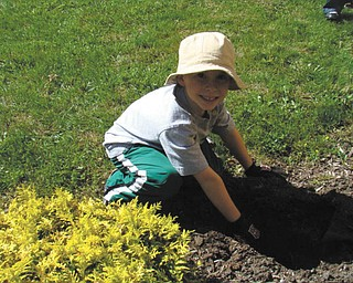 Andrew Hazy of Mrs. Bond's kindergarten class at St. Patrick School in Hubbard plants spring bulbs in front of the school. Photo sent in by Roberta Robinson.