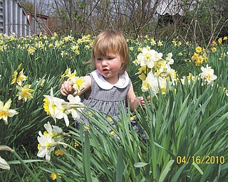 Madison Wright, 2, of Salem, picks flowers in her great-grandfather and great-grandmother's field of daffodils.