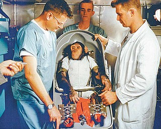 """A three-year-old chimpanzee, named Ham, in the biopack couch for the MR-2 suborbital test flight. On January 31, 1961, a Mercury-Redstone launch from Cape Canaveral carried the chimpanzee """"Ham"""" over 640 kilometers down range in an arching trajectory that reached a peak of 254 kilometers above the Earth. The mission was successful and Ham performed his lever-pulling task well in response to the flashing light. NASA used chimpanzees and other primates to test the Mercury Capsule before launching the first American astronaut Alan Shepard in May 1961. The successful flight and recovery confirmed the soundness of the Mercury-Redstone systems."""
