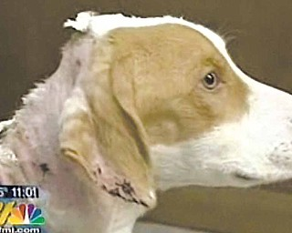 Two people have been arrested in the chemical burning of their dog, who is now in the custody of the Mercer County Humane Society. The humane society has named the 14-month-old hound mix Chance.