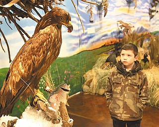 Jonathan Beveridge, 7, of East Palestine checks out an eagle displayed at the Beaver Creek Wildlife Education Center.