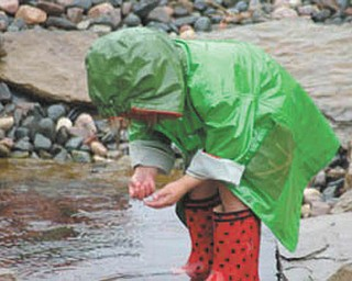 Ella Nagy of North Lima was 3 at the time this picture was taken of her searching for tadpoles in the rain.