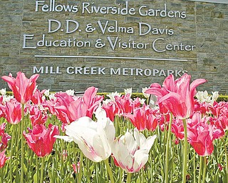 Fellows Riverside Gardens has been a popular spot for generations in the Mahoning Valley.