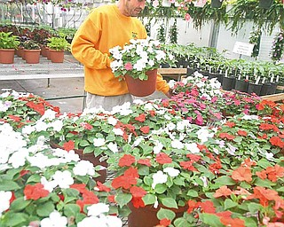 Sean Fitzpatrick works with the plants at Mashorda's County Gardens in Austintown, where wet weather slowed business during a normally busy season.