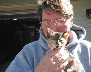 Little Kramer was rescued from a road during a rain storm in April and adopted by Cindy Renner of Mineral Ridge. Kramer was less than 6 weeks old at the time.