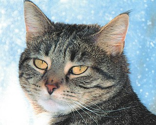 Tesla, 4, was adopted in September 2007 from Columbiana County Humane Society by Bill Schoppy of Canfield.