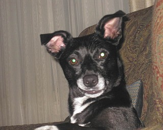 Snoot, 6 (a guess), was adopted in September 2007 from Mahoning County Dog Pound by Debbie D'Altorio.