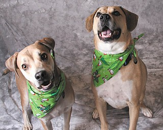Marty and Lisa White of North Jackson sent this picture. Pete, 6, on the right, is epileptic and was adopted in 2006. Max, 5, the little guy on the left, had heartworm, whipworm and a respiratory infection when he was adopted in 2007. They say you would never know it today! Both were adopted from the Mahoning County Dog Pound.