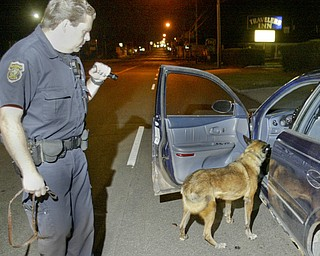 William D. Lewis The Vindicator   Boardman PD K-9 unit checks a car on market st. A small amount of marijuana was found in the car.