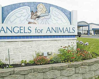 William D Lewis the vindicator Angels for Animals.