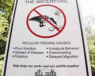 """Mill Creek MetroParks staff recently erected several """"Do Not Feed"""" signs at the Lily Pond. These signs let visitors know that regular feeding of ducks and geese causes pollution, poor nutrition and overcrowding, among other things. It's also against park policy."""