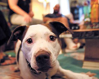 Billie Jean, a dog who was apparently abandoned and then shot, is living happily with her new owner, Tim Wagner, on the North Side. A group of North Side neighbors got together to help Billie Jean after she was found in June.