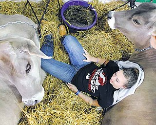 Rachel Shrock, 17, takes a rest with two of the three dairy cows she plans to show on the opening day of the 188th annual Geauga County Fair in Burton, Ohio on Thursday, Sept. 1, 2011.  The Geauga County Fair is the oldest continuously held fair in Ohio and one of the oldest in the country. (AP Photo/Amy Sancetta)