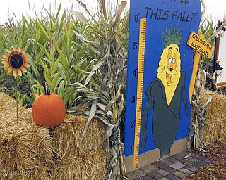 William D Lewis The Vindicator  Columbiana Maze Craze owned by  Mike Bacon features decorations such as the ruler that customers often photograph their children with.