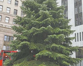 This 34-foot blue spruce Christmas tree was donated by city resident Richard Greenwalt of Lansing Avenue. Diamond Steel Construction employees, including Marty Martin, pictured above, volunteered to help the city's Department of Parks and Recreation get the tree to downtown Central Square.
