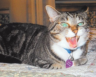 Jean McFarland of Salem says Boots yawned just as she snapped this picture. Boots is 6 years old and came from the humane society.