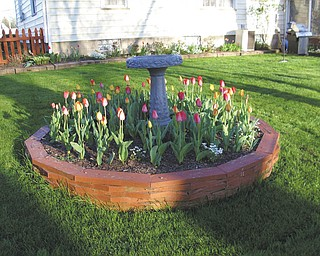 Plenty of spring blooms arrived early this year at the home of Theresa Starr and Frank Kishel in Boardman.