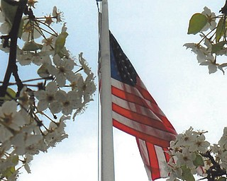 Here's the American flag between blossoms at Boardman Library. The photo was taken at dusk in March by Doxie Damico of Youngstown.