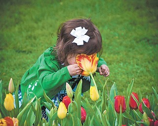 Sometimes, you just have to stop and smell the tulips at Fellows Riverside Garden in Mill Creek Park. Chrissy Cvetkovic of Canfield sent in this photo of little Reagan doing just that.