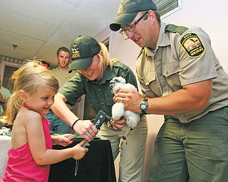 Katie Byers, 4, of North Jackson helps Jennifer Norris, Ohio Department of Natural Resources research biologist, and Dan Wright, fish-management technician, band one of the four peregrine falcon chicks that live in a nest atop the Millennium Building in downtown Youngstown.
