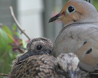 A close-up look at some feathered friends. Photo sent in by Roberta Cencer of Poland.