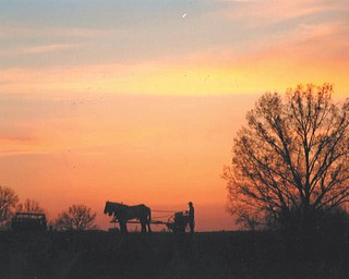 A silhouette taken this year in New Wilmington, Pa., by Lana Vanauker of Canfield.