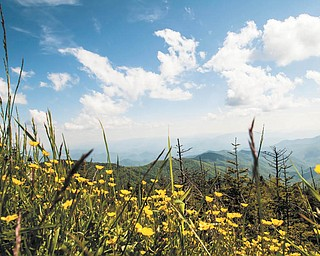 These buttercups at Clingman's Dome, N.C., were snapped May 24 by Dan Shields of Canfield.