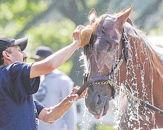Groom Ignocenzio Diaz bathes I'll Have Another at Belmont Park on Wednesday. The winner of the Kentucky Derby and Preakness will attempt to win the Belmont Stakes and Triple Crown on Saturday from the 11th post position.