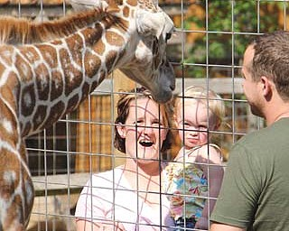Levi, a 7-month-old giraffe, and Adam Guiher, owner of Living Treasures Animal Park near New Castle, Pa., greet Heather Livesay of Boardman and her daughter, Ava, 2, at the park.