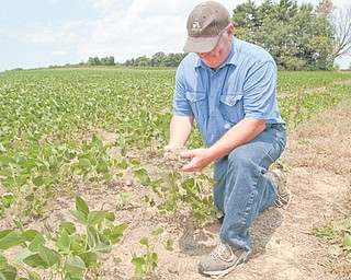 Sam Detwiler, owner of Detwiler Farm in southern Mahoning County, holds a clump of dry soil in front of his soybeans. Detwiler's soybean crop has patches where the plants did not grow, and those that did are shorter than normal.