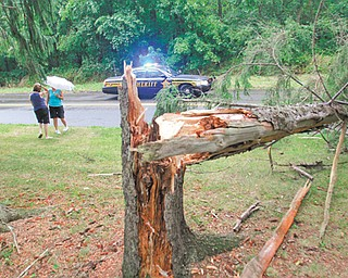 A pine tree was toppled along Leffingwell Road west of Tippecanoe Road in Canfield Township after a severe thunderstorm Thursday. The storm brought high winds and rain that downed tree limbs, power lines and caused power outages in the Mahoning and Shenango valleys.