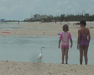 Sisters Camryn and Marissa find a beautiful bird on Lovers Key Beach in Florida. Photo sent in by Kelly Alexander.
