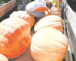 Jack Lanterman, left, Rick Lanterman and Charles Lanterman unload giant pumpkins from a truck at the Canfield Fair. The pumpkins are on display there. The fair began Wednesday and continues through Labor Day.
