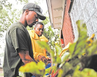 Anthony Fultz and Demetrius Pugh, both of Youngstown, wash beets harvested at the Iron Roots Urban Farm in the Idora Neighborhood on the city's South Side. The farm is part of Youngstown Neighborhood Development Corp.