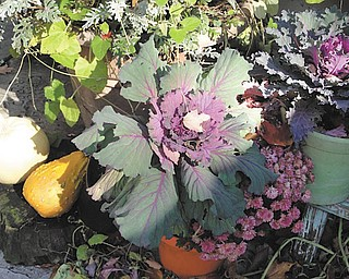 Marsha Karzmer of Boardman sent in this photo of cabbage plants and mums from her garden.