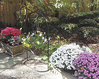 Marsha Karzmer of Boardman sent in this photo of mums, cabbage plants and fall violas from her garden.