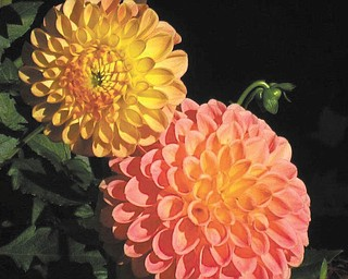 Cathy Hinderliter of Canfield submitted this photo of her dahlias.
