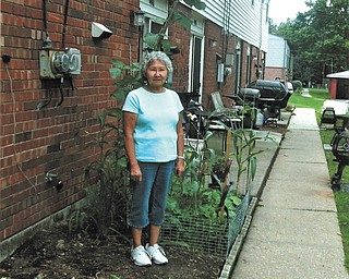 Lyle Filey of Youngstown must have quite a green thumb. Here, his wife, Amelia, stands next to a 14-foot pole bean.