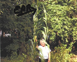 Amelia Filey of Youngstown holds one of two ears of corn on a 14-foot-tall cornstalk grown by her husband, Lyle, who submitted this photo. The other ear is near the top of the stalk.